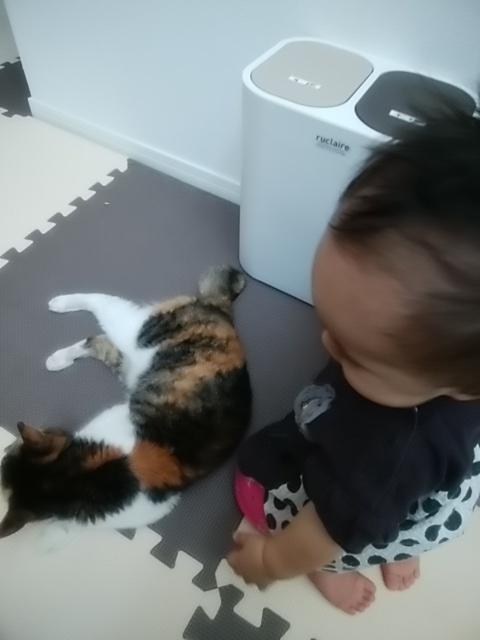 娘に遊ばれにくるネコのちび